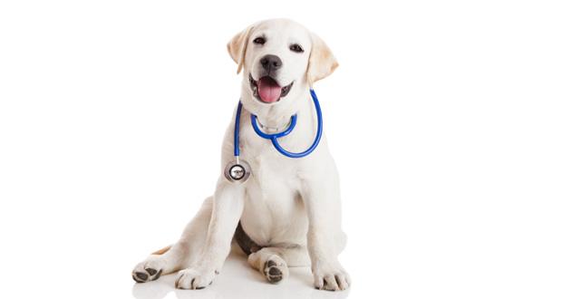 veteriner-olmak-istiyorum