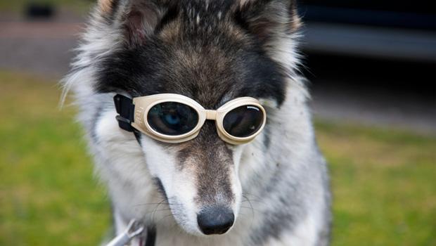 girisimcilik-urunu-Doggles