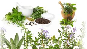 bitkisel-ilac-isi