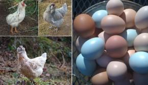 renkli-yumurta-satmak
