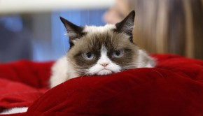 "TODAY -- Pictured: Grumpy Cat appears on NBC News' ""Today"" show -- (Photo by: Peter Kramer/NBC/NBC NewsWire via Getty Images)"