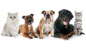 11-essiz-ve-faydali-evcil-hayvanlarla-ilgili-isletme-fikri