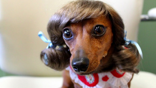 9-wiggles-dog-wigs
