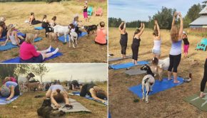 keci-yogasi