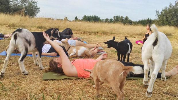 keci-yogasi-3